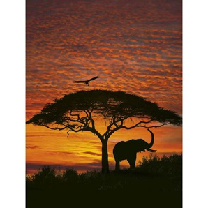 Komar Fotomurale National Geographic African Sunset 194x270 cm 4-501