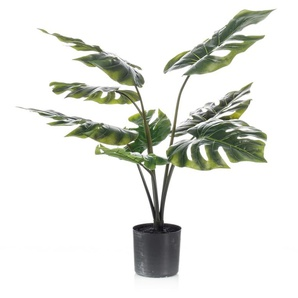 Emerald Pianta di Monstera 85 cm in Vaso