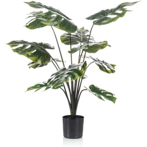 Emerald Pianta di Monstera 98 cm in Vaso
